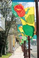Street of Montrose